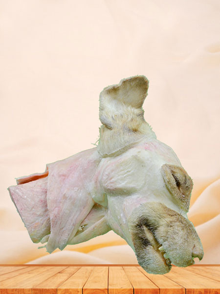 median sagittal section of dog head and neck plastination