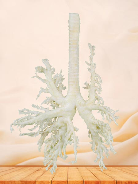 medical dog bronchial tree specimen