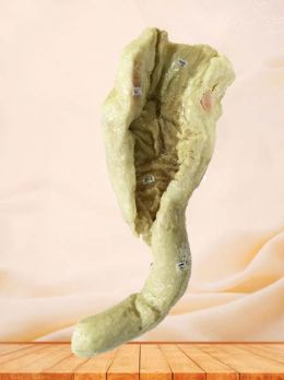 Interior view of rectum plastinated specimen