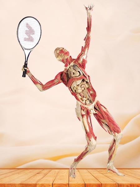 playing tennis plastinated specimen