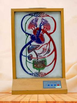 Electric model computer of blood circulation