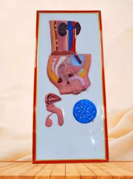 Male urinary system relief model