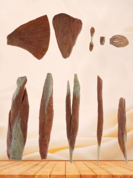 Classification of muscles plastinated specimen