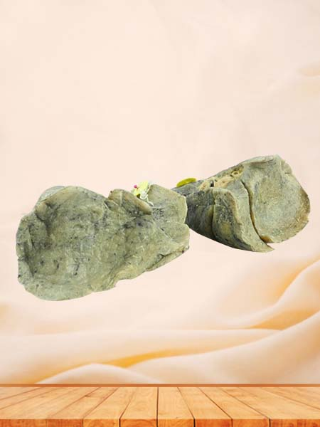Root of the lung medical specimen