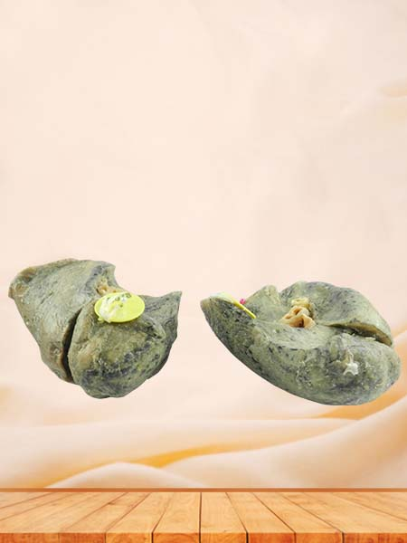 Root of the lung specimen for sale