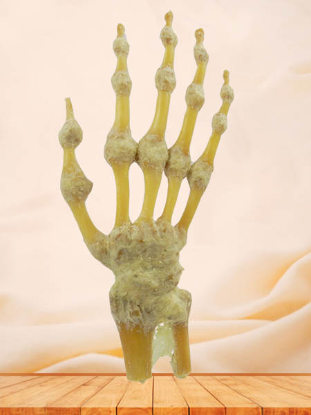 human hand joint