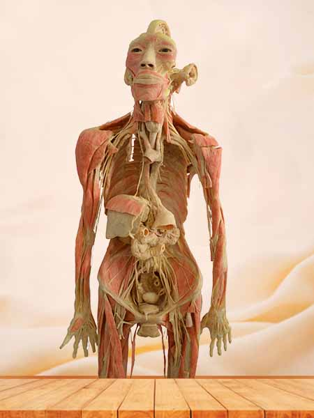 thinker plastination