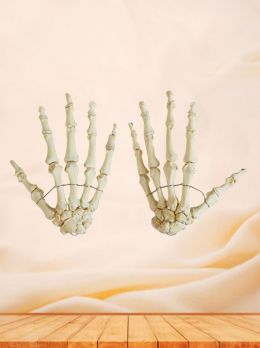 Human Hand Bones For Medical Education