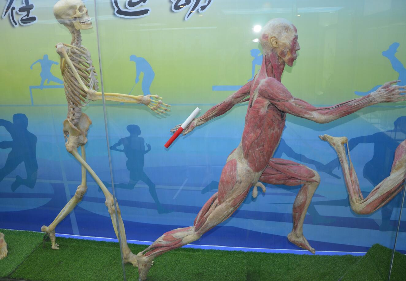 Runner plastination of human body
