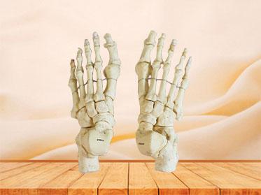 Natural foot bones