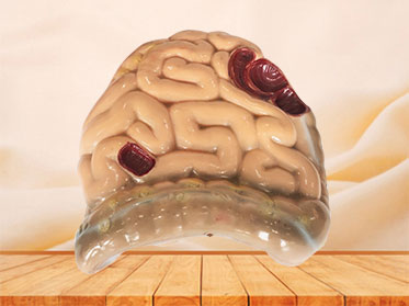 soft silicone large and small intestine model for sale