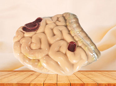 soft silicone large and small intestine anatomy model for sale