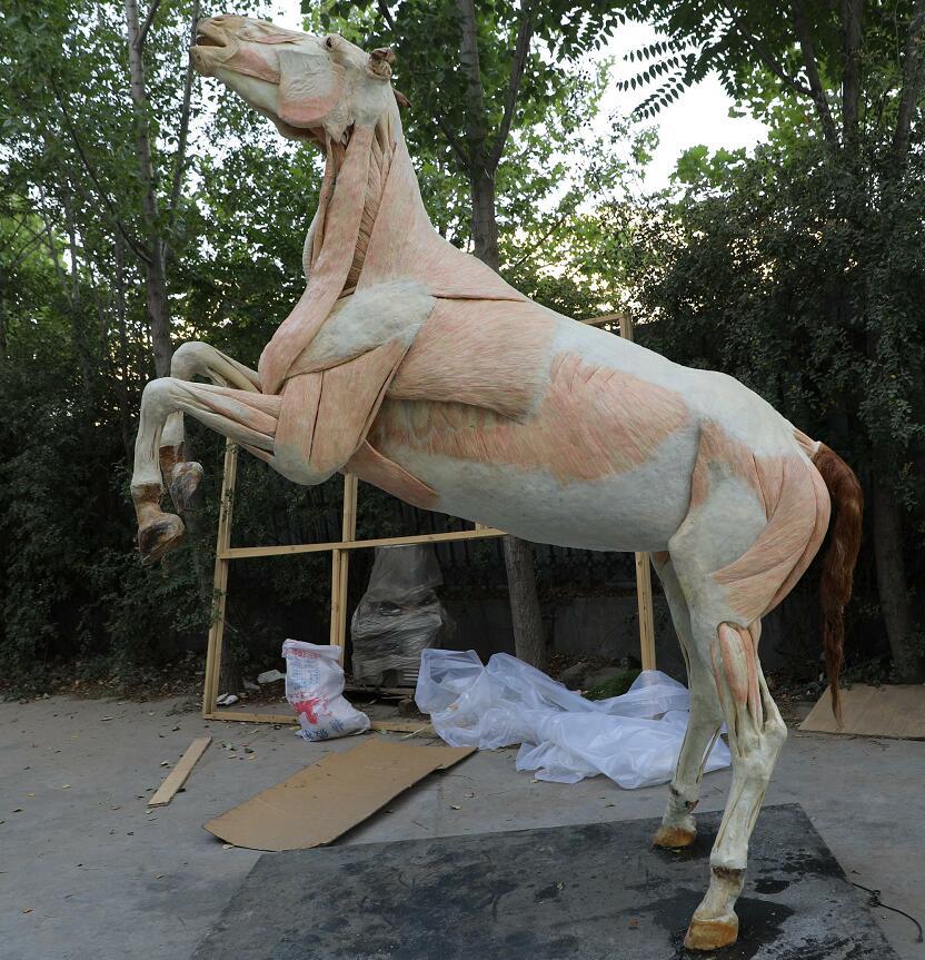 plastination horse