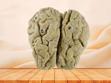 Brain of Horse specimen