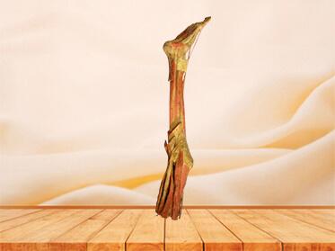 Deep muscles of lower limb