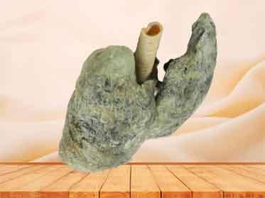 Double lungs specimen for sale