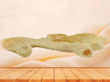 Gastric mucosa specimen for sale