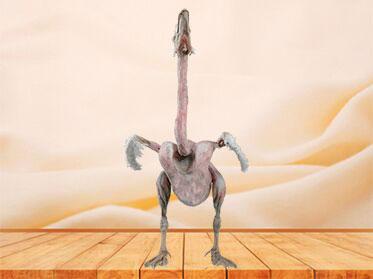 Goose whole body plastination specimen