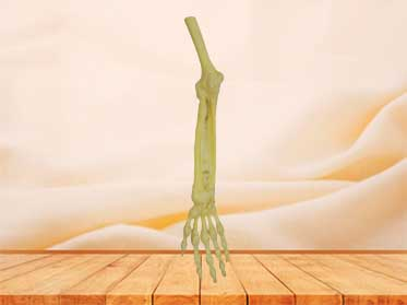 Joint of the upper limb