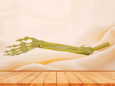 Joint of the upper limb for sale