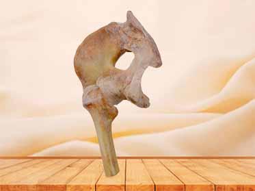 ligaments of pelvis