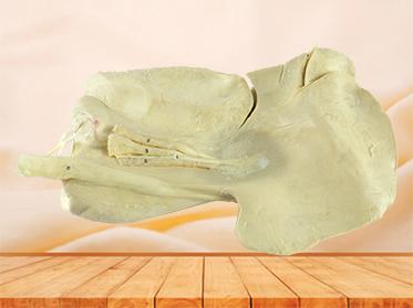 Liver of Horse medical specimen