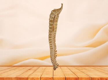 Median sagittal section of vertebral column