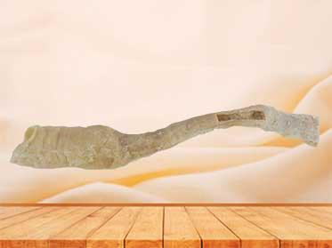 Oesophagus medical anatomy specimen