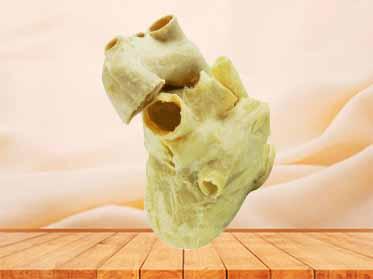 Pericardium anatomical specimen