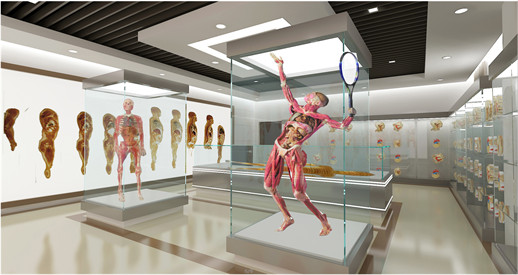 Plastination Science Museum and Factory