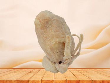 Prostate seminal vescle, bladder human plastination for sale
