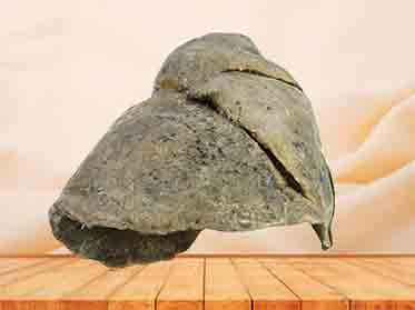 R-lung plastinated specimen