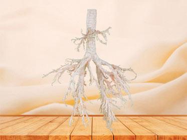 Sheep bronchial tree plastinated specimen