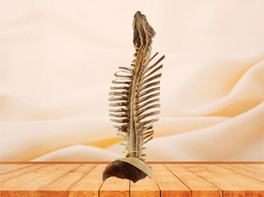 Spinal cord with nerves in vertebral column specimen