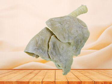 The lung of dog plastinated anatomy specimen