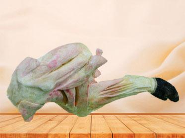 The vascular and nerve of pig foreleg plastination specimen