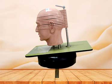 Transverse plane model of the head and neck