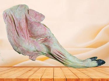 anterior limb vessels and nerves of pig teaching specimen