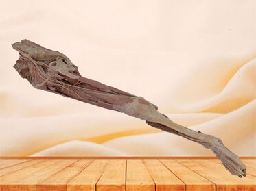 artery of lower extremity plastination specimen