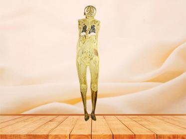 coronal section of human body