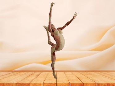 dance lady specimen plastination