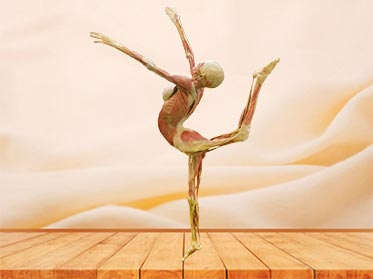 dance lady teaching specimen