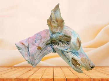 deep vein of dog head and neck plastinated specimen