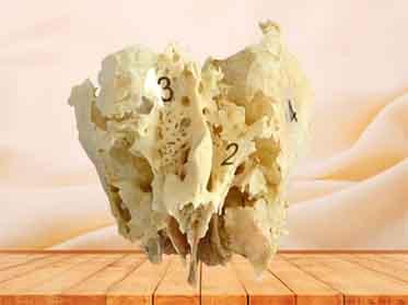 ethmoid bone specimen