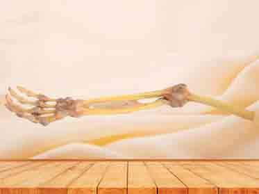 forearm bone union