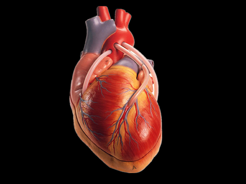 heart-with-the-bypass-vascular