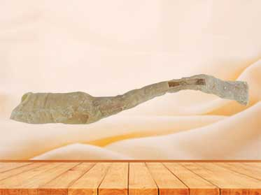 human oesophagus specimen