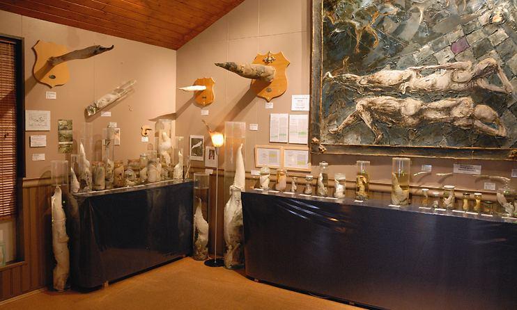husavik phallusmuseum