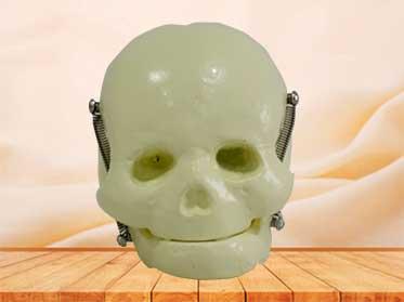 infant skull model