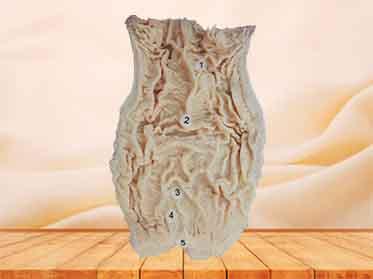 interior view of rectum